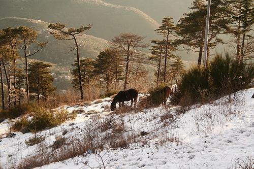 faito e cavalli con la neve